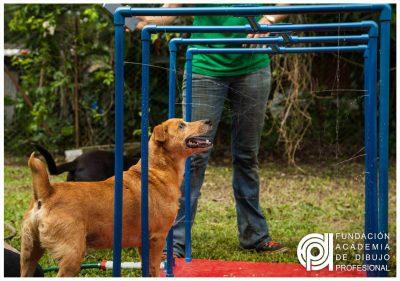 Entrega Proyecto Integrador en la Fundación Paraíso de la Mascota